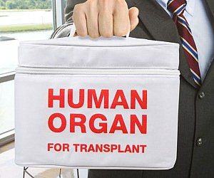 Human Organ Transport Lunch Bag