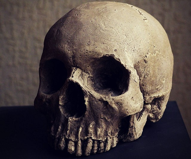 skull replica, Skeleton