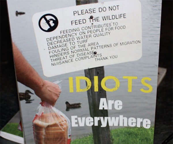 Idiots Are Everywhere Book