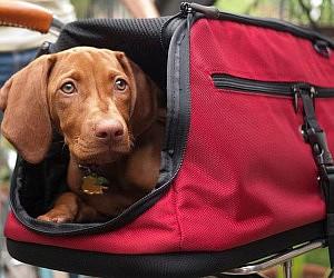 In-Cabin Pet Carrier