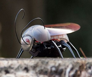 iPhone Controlled Insect