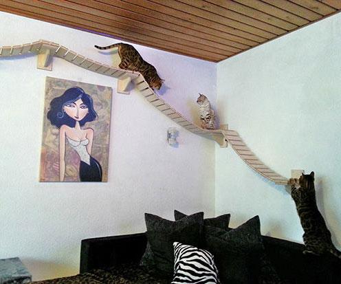 Amazing Wall Mounted Cat Furniture