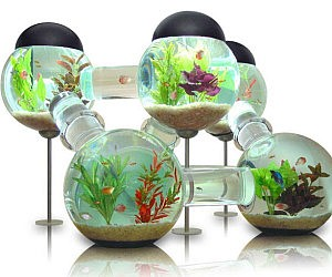 Labyrinth Aquarium