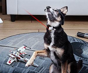 Laser Collar Pet Toy