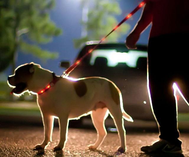 Light Up Dog Leashes