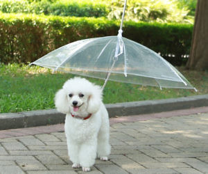 The Dog Umbrella