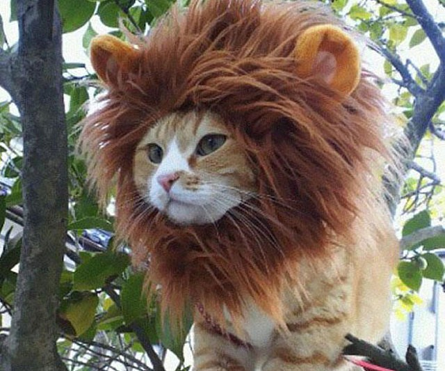 Lion Cat Hat