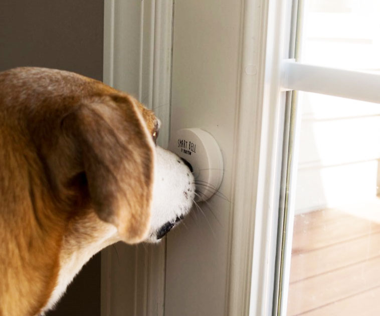 Smart Doggy Doorbell