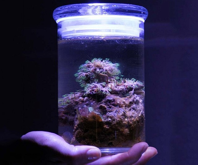 Miniature salt water aquarium for Oceanic fish tanks