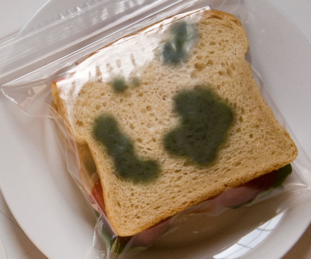 4 pack Gross Moldy Sandwich Bags Novelty Gag Gift Prop