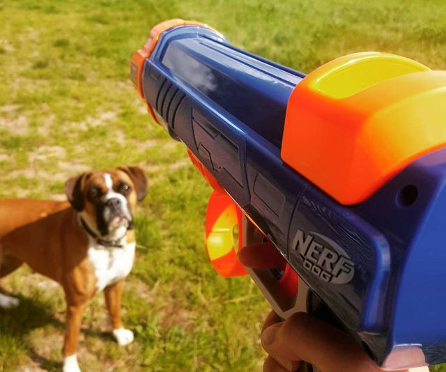 nerf dog ball blaster review