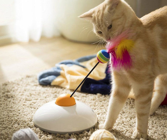 Controlled interactive cat toy smartphone controlled interactive cat toy gumiabroncs Gallery