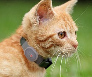 Pet Locator Collar