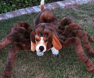 Simple Outfit Army Adorable Dog - pet-spider-costume-300x250  Perfect Image Reference_822925  .jpg