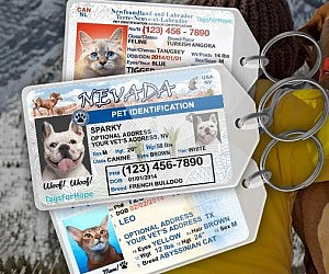 Driver's License Pet Personalized Tag