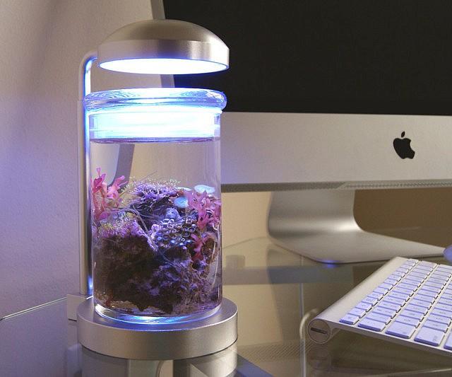 Miniature Salt Water Aquarium