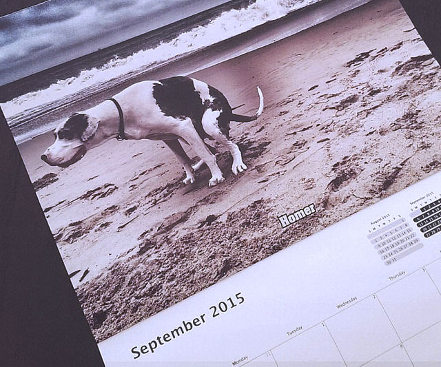 Pooping Dogs Calendar - coolthings.us