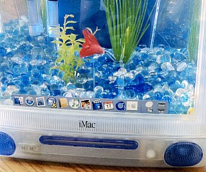 Recycled imac aquarium for Labyrinth fish tank