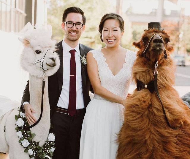 Borrow Wedding Dress 23 Simple Rental Wedding Llamas