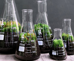 Science Beaker Terrarium Set