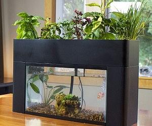Self sustaining aquarium garden for Garden aquarium design