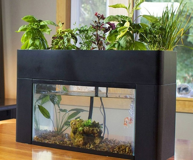 Sustaining Aquarium Garden