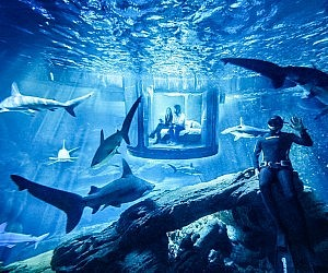 Shark Aquarium Underwater Bedroom