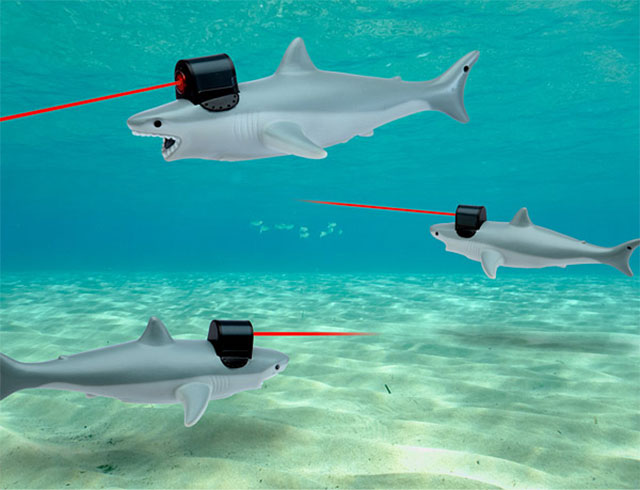 Shark Laser Pointer