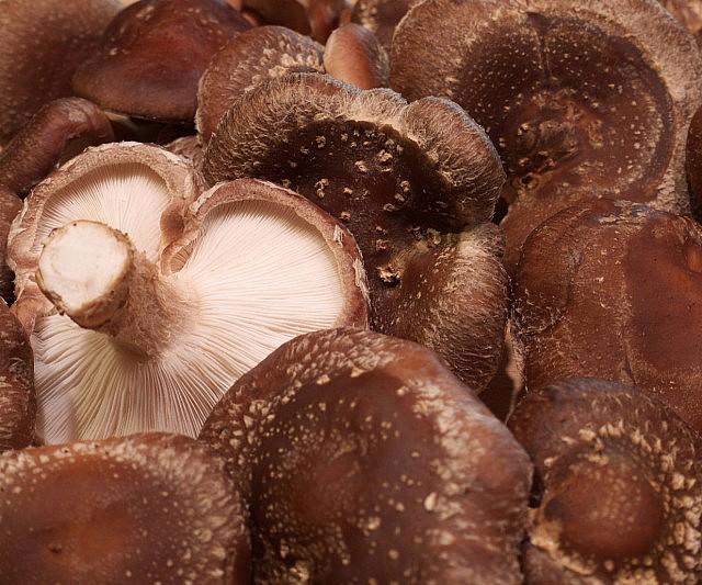 Shiitake mushroom growing kit solutioingenieria Images