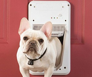 SmartKey Enabled Dog Door