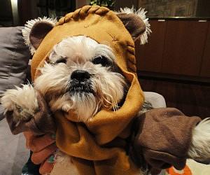 & Star Wars Ewok Dog Costume