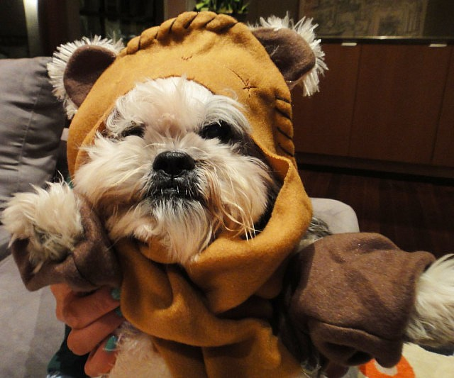 & Star Wars Ewok Dog Costume