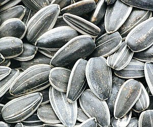 Caffeinated Sunflower Seeds