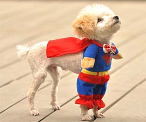 Beautiful Outfit Army Adorable Dog - superman-dog-costume  Image_608448  .jpg