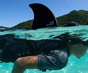 Swimming Shark Fin
