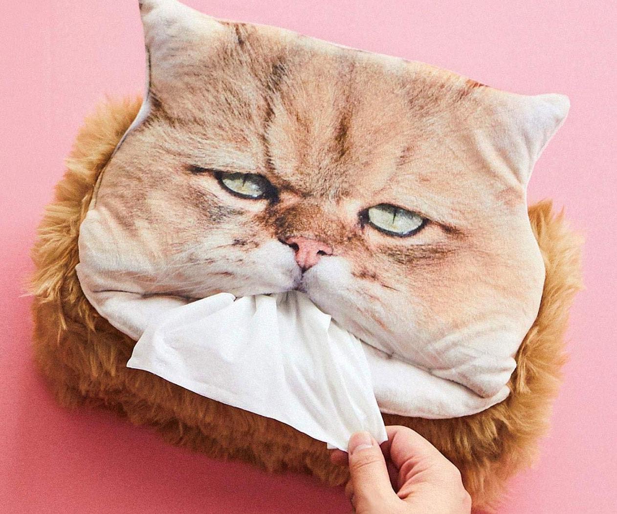 Cat Head Tissue Bo