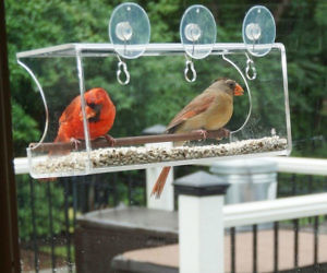 Transpa Window Bird Feeder