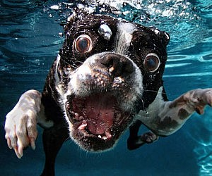 Underwater Dogs Photography Book