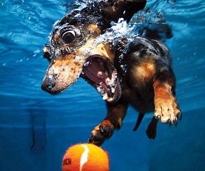 Underwater Puppies Photography Book