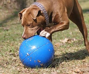 Virtually Indestructible Pet Ball