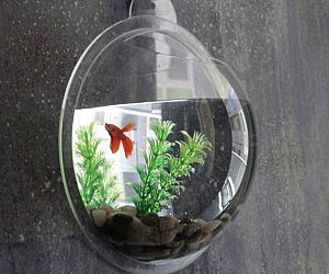 Wall Mounted Fish Aquarium