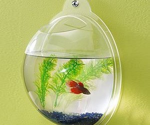 Fish Bowl Without Fish