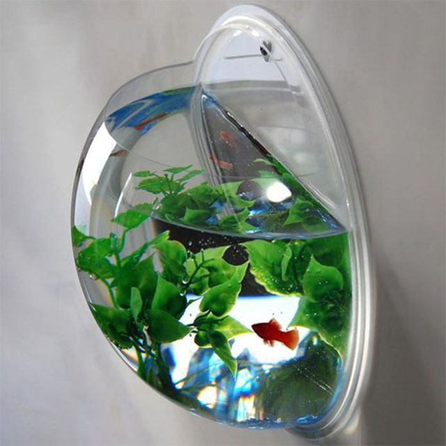 Cool betta fish bowl images galleries for Wall mount fish bowl