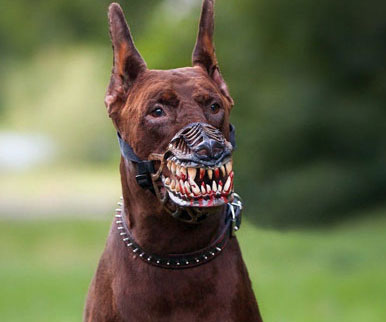 Muzzle To Stop Dog Eating Poop