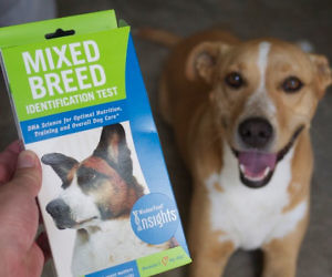 DOG BREED DNA TEST